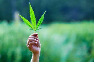 Virginia marijuana injury lawyer