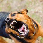 Senate to Vote on Rabid Pet Quarantine Bill