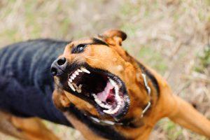Norfolk, Virginia dog bite lawyer